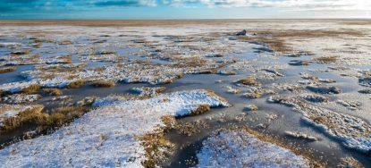 Parámetros físico-químicos y biológicos de la columna de agua y sedimentos bentónicos en Bahía Lomas, Tierra del Fuego, Chile