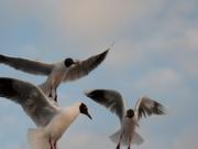 Celebrarán el Día Mundial de las Aves Playeras