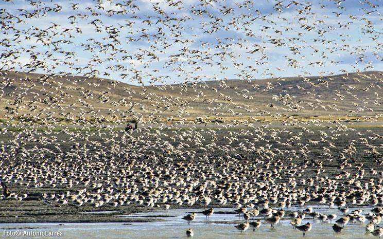 Bahía Lomas: el humedal más importante de Sudamérica