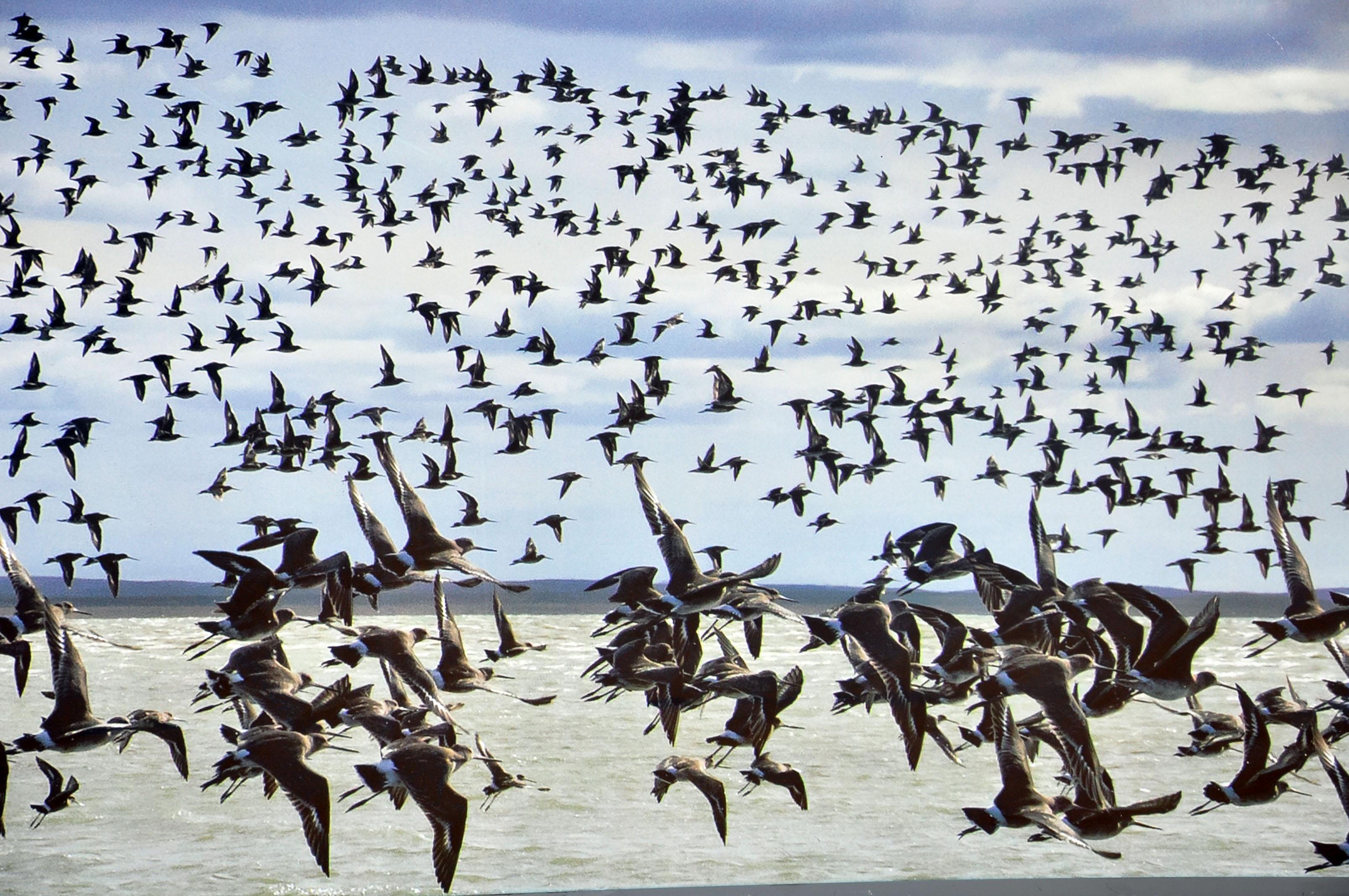 ENAP y UST comprometidos con Bahía Lomas el humedal más austral de Chile