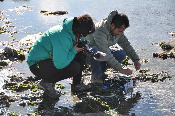 Evalúan niveles de acidificación del océano en el Humedal de Bahía Lomas