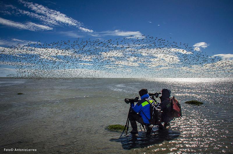 Creando conciencia para la conservación de las aves playeras