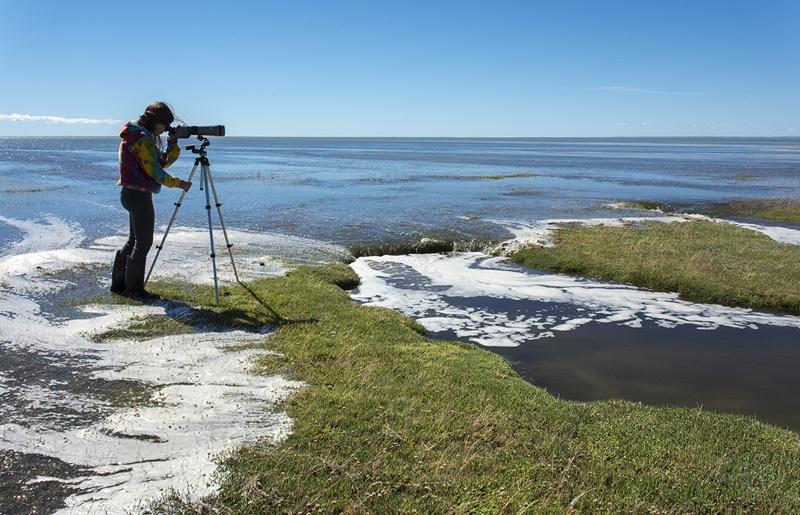 """""""Entender lo que ocurre en el humedal Bahía Lomas es clave para promover medidas efectivas para la conservación de aves playeras"""""""