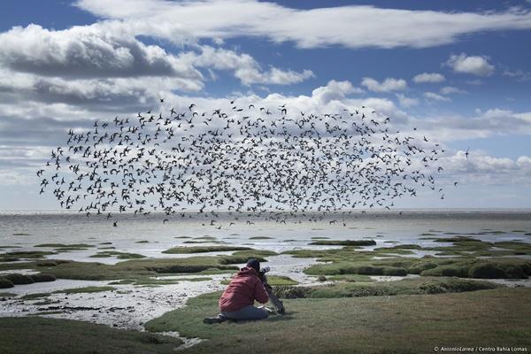 Bahía Lomas busca ser Santuario de la Naturaleza: se formaliza solicitud de declaración ante Ministerio de Medio Ambiente
