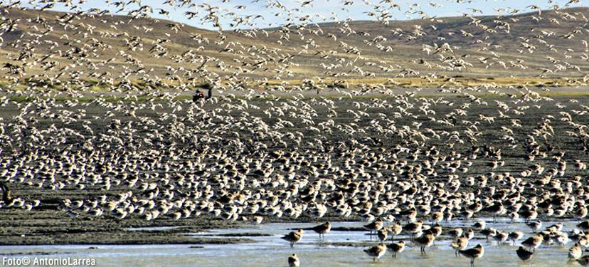 Implementación de acciones del Plan de Manejo del Sitio Ramsar Bahía lomas: Conservación en la Patagonia Austral
